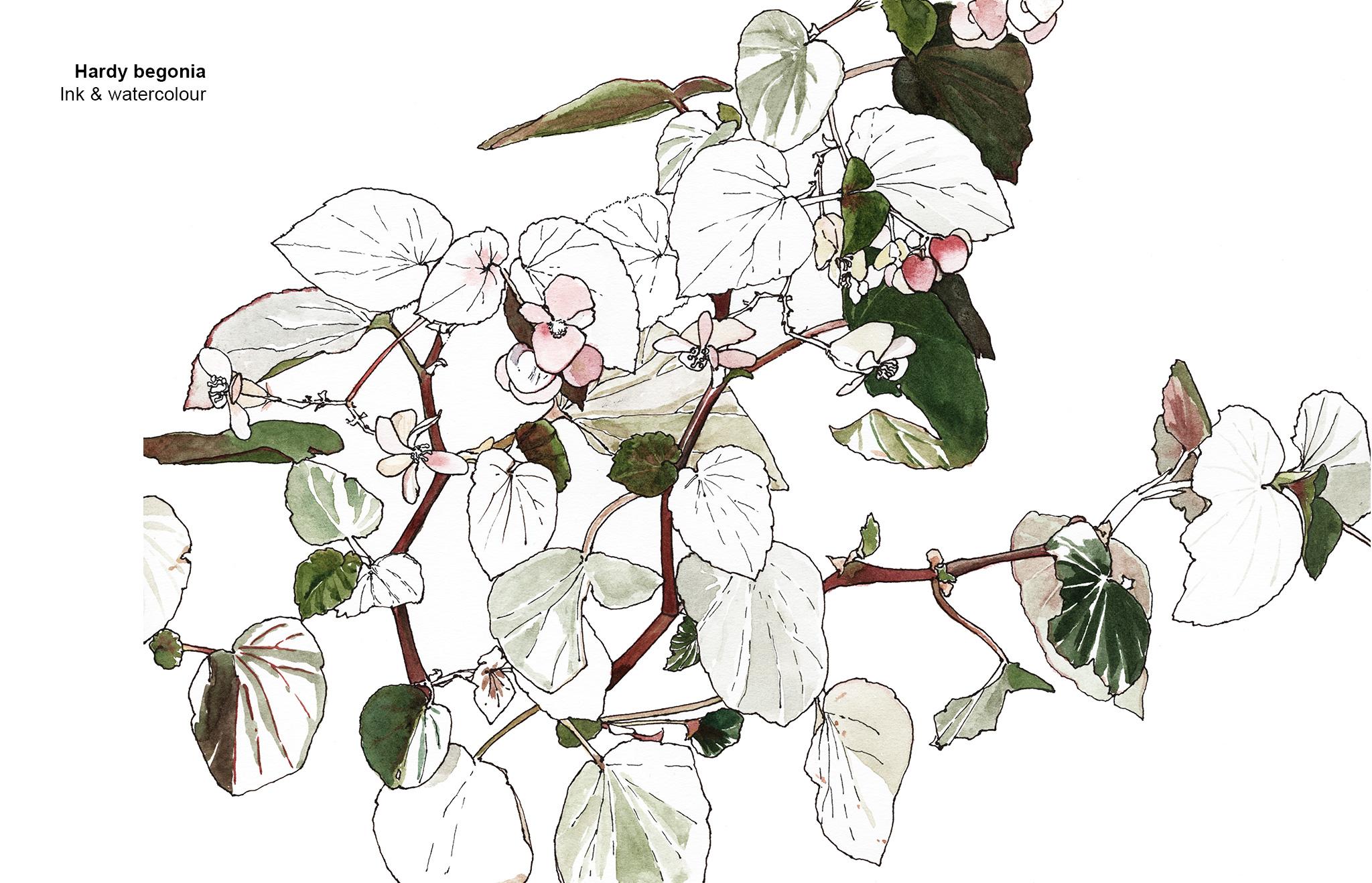 09-begonia