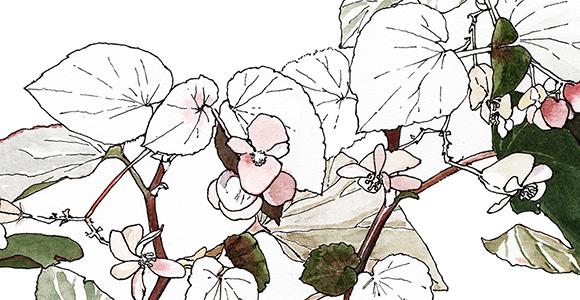 botanique-SLIDER-01